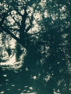 trees-cyano-toned-2-w-229x300