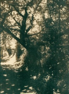 trees-cyano-toned-3-w-222x300