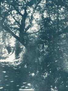trees-cyano-toned-w-223x300